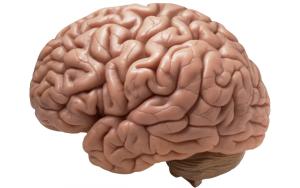brain-990x622[1]
